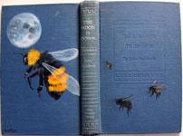 moonbee