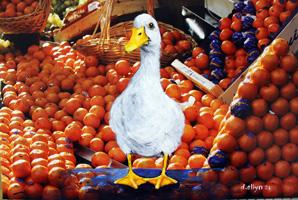 duckorange