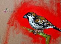 cherryfinch
